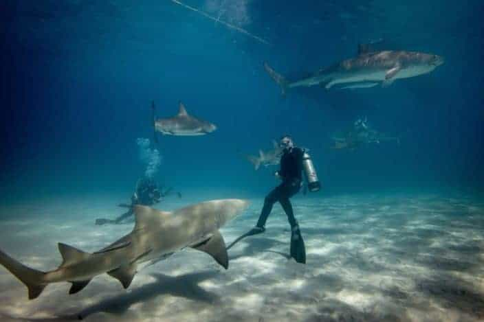 Creative but Adventurous Things To Do - Swimming with Sharks.