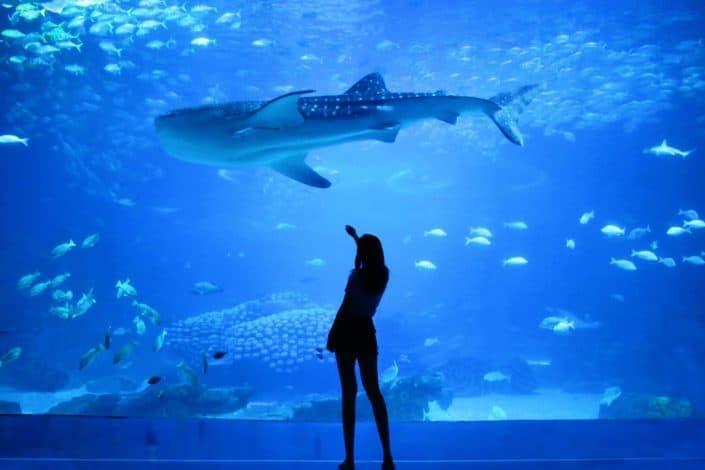 Go to an Aquarium.jpg