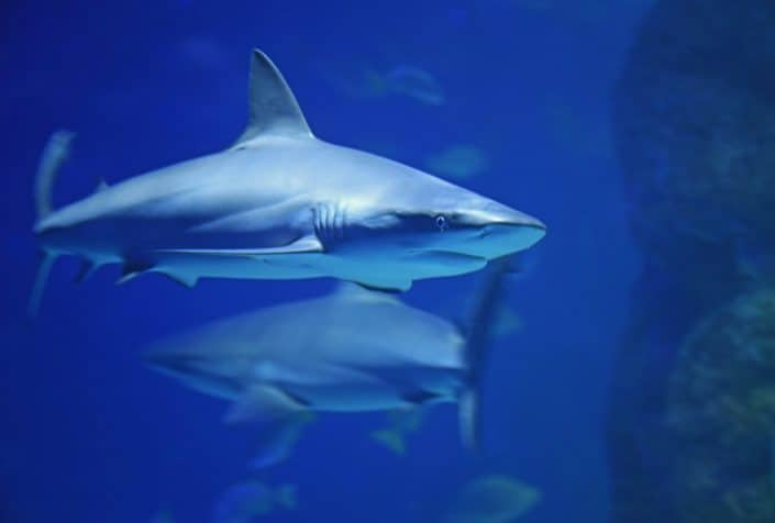 Track sharks, dolphins and turtles with OCEARCH Tracker.jpg