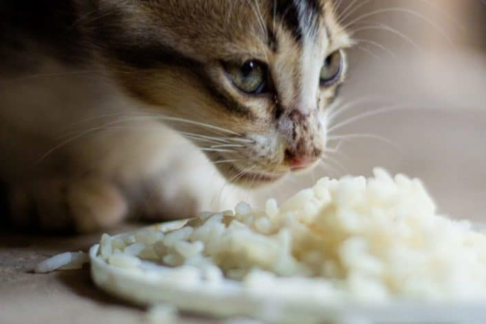 Why isn't there a mouse-flavored cat food?.jpg