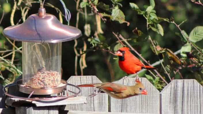 Make some homemade bird feeders to hang in the yard.jpg