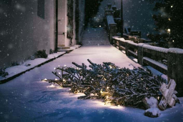 A fallen pine tree designed with lights