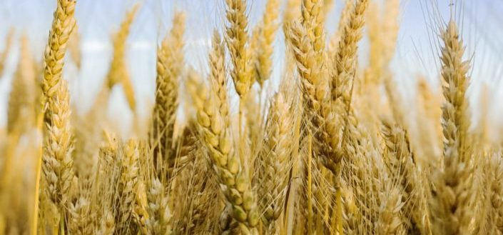 Wheat Bourbon.jpg