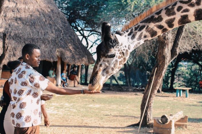 Do an animal encounter at a zoo.jpg