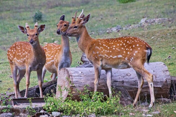 Watch wildlife.jpg