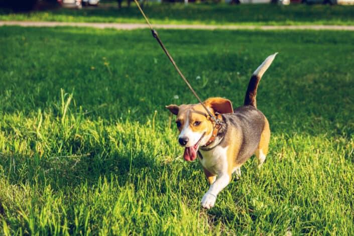 Walk someone's dog together.