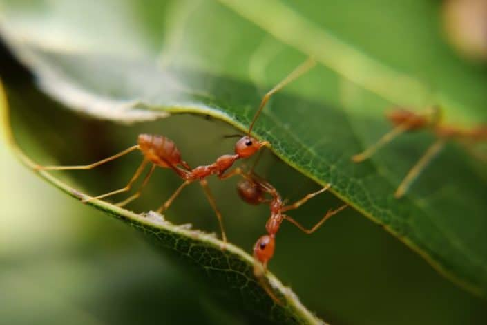 Which continent doesn't have ants?.jpg