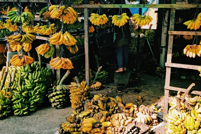 ripe and unripe bananas hanging and placed on the ground