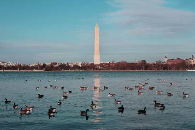 body of water filled with ducks - presidential trivia