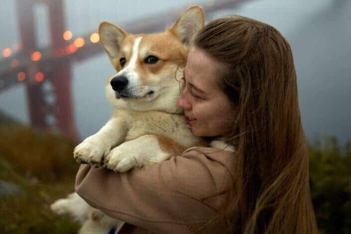 Young woman hugging adorable Corgi