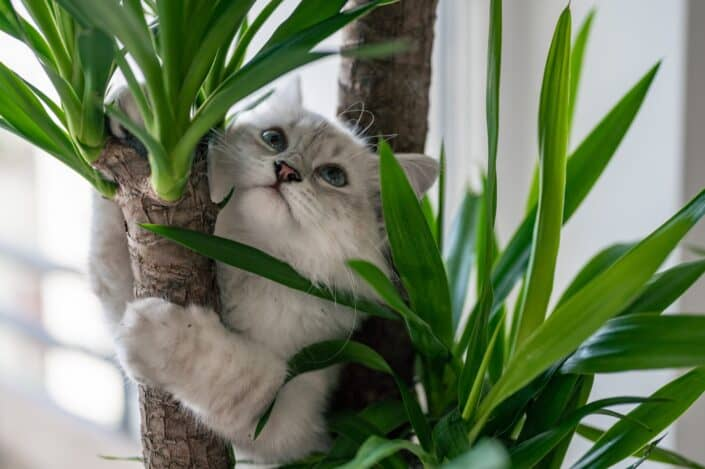 Cat climbing on an indoor plant