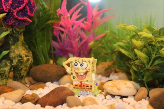 spongebob trivia - main